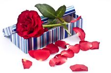 Free Roses In Gift Box Royalty Free Stock Photo - 14332645
