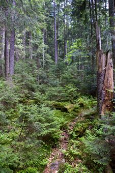 Free Forest Thicket Stock Photos - 14333723