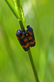Macro With Two Bugs Stock Photography