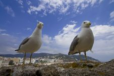 Free Two Seagulls Stock Image - 14334691