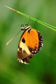 Free Appealing Butterfly On A Stem Royalty Free Stock Photography - 14336047