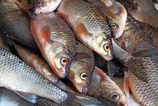 Free Fish Royalty Free Stock Photos - 14336298