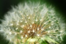 Free Macro Photo Of A Dandelion Royalty Free Stock Image - 14336846