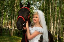 Free Portrait Of The Bride Royalty Free Stock Photo - 14337835