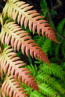 Free Fern Stock Photography - 14338052