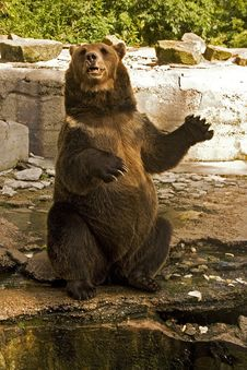 Free Bear Iz Zoo Royalty Free Stock Photos - 14338088
