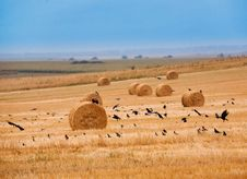 Free Hay Field Stock Image - 14338501