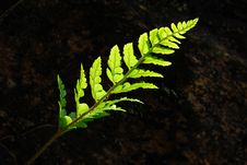 Free Fern Stock Photography - 14338642