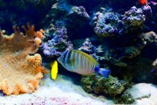 Free Colorful Fish Stock Images - 14340174