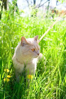 Free English Sleek-haired Cat Stock Photo - 14340210
