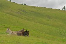 Free Wild Donkeys Stock Photos - 14340553