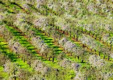 Orchards In Spring Time Stock Images