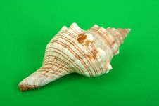 Free Sea Cockleshell Stock Photos - 14340693