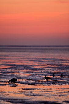 Free Reflection Of The Sunset In The Ocean Royalty Free Stock Images - 14341429