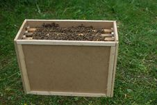 Free Bees In A Transfer Beehive Royalty Free Stock Photo - 14341575