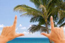 Free Hands Framing Palm Trees And Tropical Waters Stock Photos - 14341693