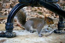 Squirrel Below The Bench In The Park Stock Photos
