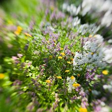 Free Spring Flowers In Tilt-shift Royalty Free Stock Photo - 14342345