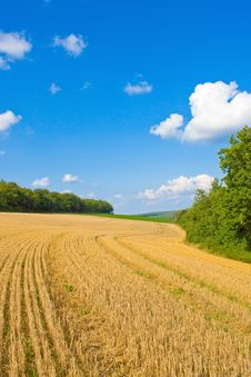 Free Golden Field Stock Photo - 14343200
