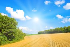 Free Golden Field With Sunlight Stock Photos - 14343223