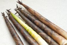 Free Bamboo Shoots Royalty Free Stock Photo - 14343315