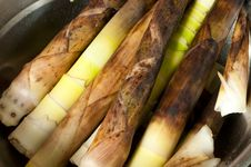 Free Bamboo Shoots Stock Photos - 14343393