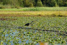 Free Lake Stock Image - 14345571