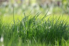Free Green Grass Stock Photography - 14346572