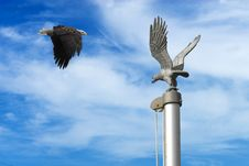 Free Eagle With Flag Pole Stock Photos - 14346783