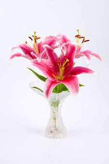 Free Pink Lily Stock Photo - 14346840