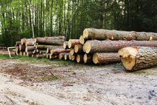 Free Official Destruction Of A Wood Royalty Free Stock Photo - 14347835