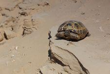 Free Steppe Turtle Stock Photo - 14348260