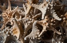 A Pile Of Dried Starfish Stock Images