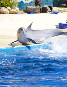Dolphin Jump Out Royalty Free Stock Images