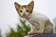 Free Curious Kitten Royalty Free Stock Photography - 14348897