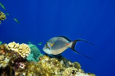 Free Underwater Image Of Tropical Fishes Stock Photos - 14349733