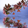 Free Reflection In Water Royalty Free Stock Photos - 14350228