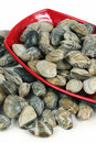 Free Live Clams Royalty Free Stock Photos - 14350558