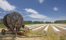 Free Asparagus Field Stock Photo - 14350320