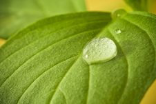 Free Water Drops On Leaf. Royalty Free Stock Photo - 14351125