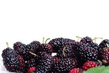 Free Blackberries Royalty Free Stock Image - 14351586