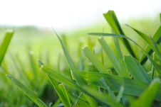 Free Green Grass Royalty Free Stock Image - 14352546