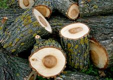 Free Wood Stock Photography - 14353182