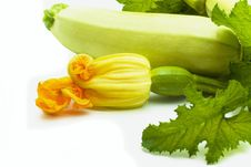 Free Vegetable Marrows Royalty Free Stock Photos - 14353378
