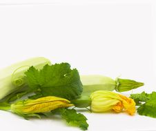 Free Vegetable Marrows Royalty Free Stock Photography - 14353407