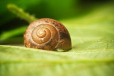 Free Snail On A Leaf Royalty Free Stock Images - 14354289