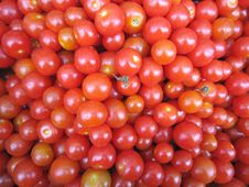 Free Red Cherry Tomatoes Stock Photo - 14355230