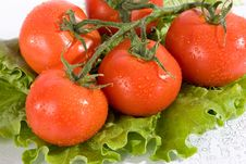 Free Tomato And Salad Leaves Stock Images - 14355694