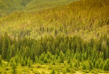 Free Mountain Forest Royalty Free Stock Images - 14357069