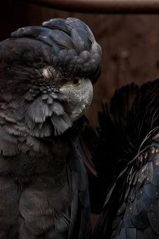 Sleepy Parrot Royalty Free Stock Photo